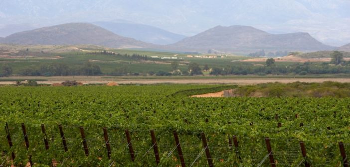 Discovering South African wines