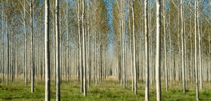 Forestry not relevant? Think again!